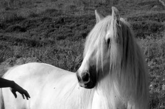 horses 5