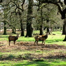 Richmond Park 3779