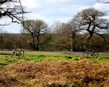 Richmond Park 3784