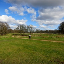 Richmond Park 3787