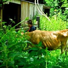 Jane's enchanted Tea Garden 26