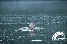windermere swim 10
